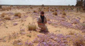 Zapadna Sahara, zadnja afrička kolonija